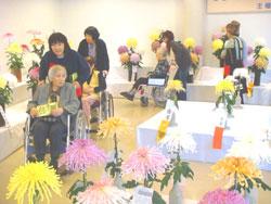 菊に魅せられて・・・南砺市菊祭り会場にて(11/5・6)